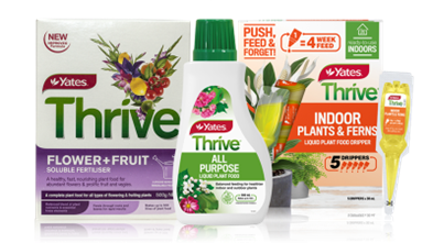 Yates Thrive