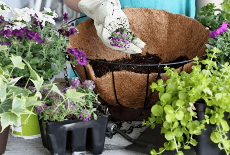 autumn-hanging-baskets_1565852538009