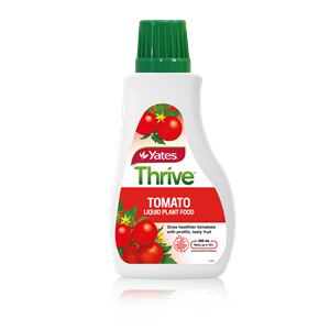 Thrive Tomato 1600X