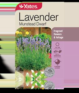 lavender-munstead-dwarf-2 (1)