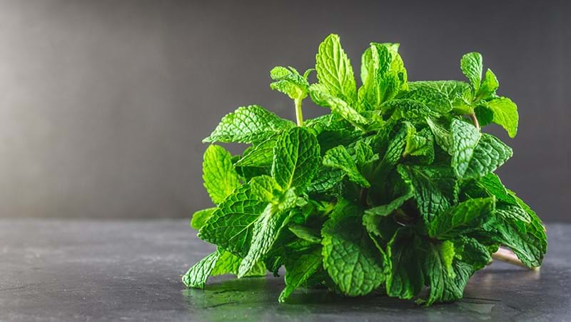 how-to-grow-mint_1551160329906