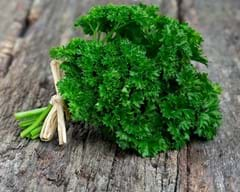 curled-parsley-8