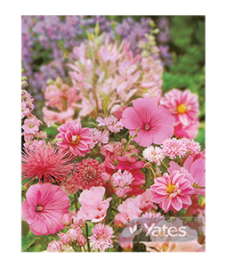 accent-on-pink-selection-of-pink-flower-varieties-3 (1)